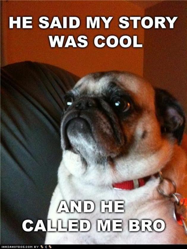 funny pug memes Google Search