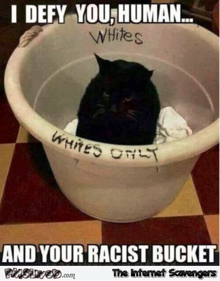 Defying your racist human funny cat meme