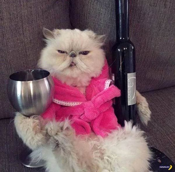 33 Funny Pics of Random fbeat Weirdness funny cat with wine bottle and glass