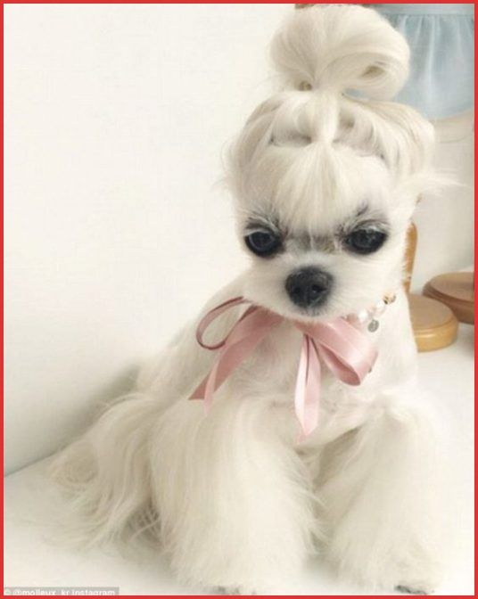 Dog Hairstyles 15 Very Interesting and Funny Dog Haircuts Dogs Pinterest Dog Hairstyles