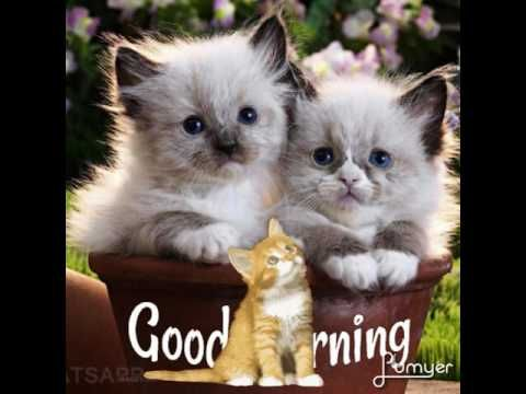 Good morning images by cute cat