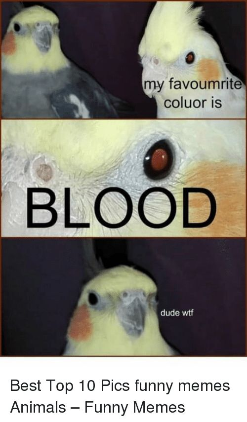 Animals Dude and Funny my favoumrite coluor is BLOOD dude Best Top