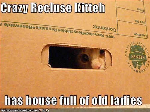 Recluse I Love Cats Cute Cats Funny Kitties Adorable Animals Haha