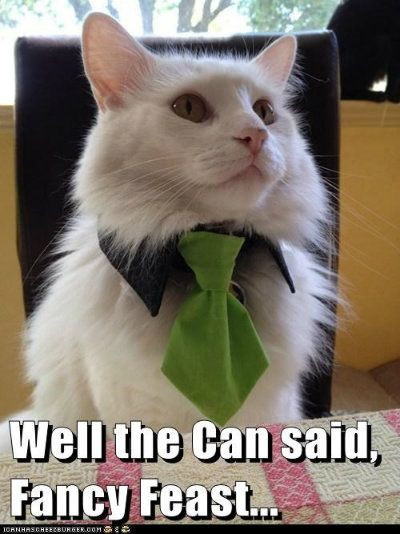 cat meme well the can said Fancy Feast dressed up cat cat
