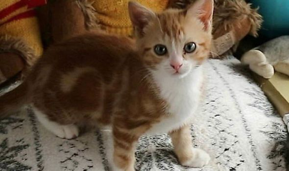 Henrietta has six legs with growing paws and claws Image NC