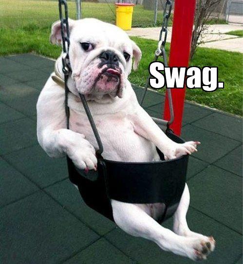 Swag Dachshund Bulldog Pembroke Welsh Corgi Basset Hound dog dog breed dog like mammal mammal old