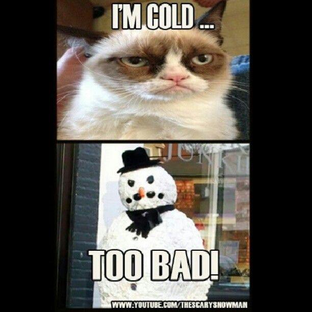 meme funny prank grumpycat