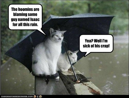 captions Cats hurricane hurricane isaac isaac