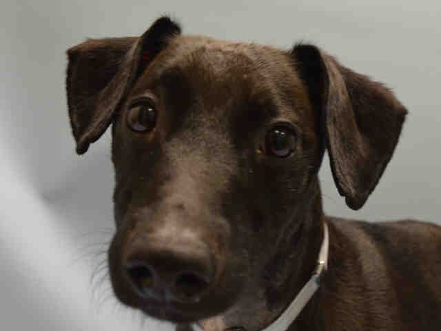 RTO SAFE❤ 7 13 16 RETURN 7 10 16 PET HEALTH BLACK JACK – A RETURNED 07 18 15 NEUTERED MALE BLACK WHITE PATTERDALE TERR MIX