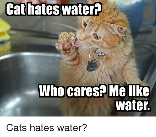 Cats Water and LOLcats Cat hates water Who cares Melike water Cats