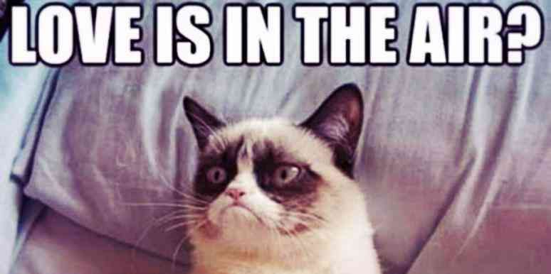 The 21 Best Grumpy Cat Memes And Quotes About Love And Life