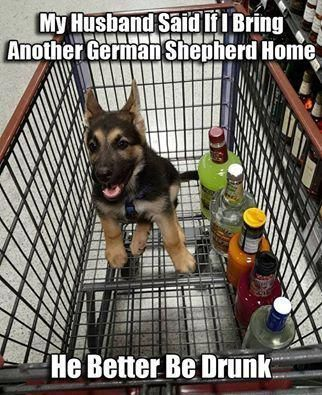 The German Shepherd This is what you need to do to you a little furry baby Hahaha germanshepherdmemes animal Pinterest