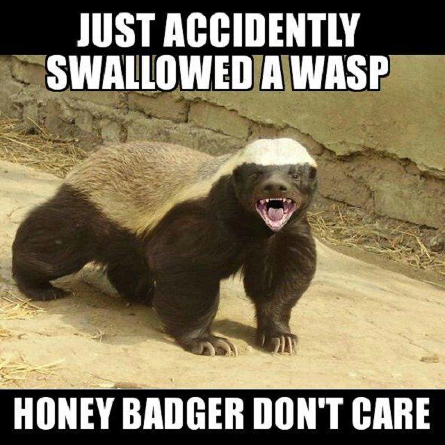 2011 Honey Badger Don t Care