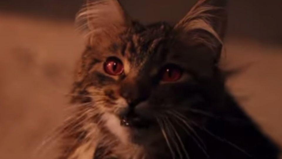 Grab the Unique Half Dead Funny Cat Pictures
