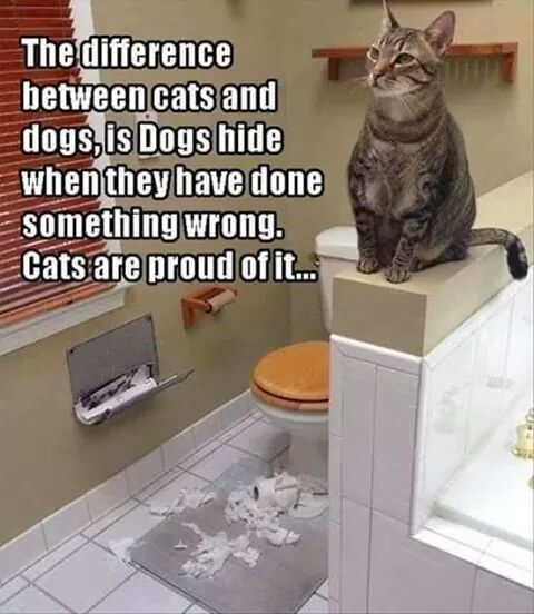 Dog VS Cat Meme about how cats don t hide their wrong