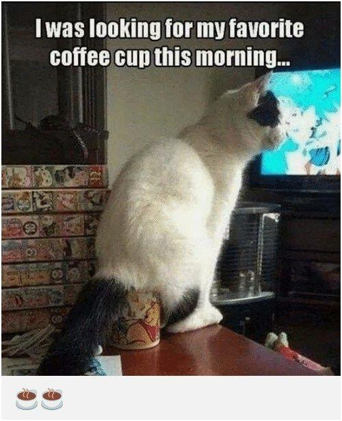 "I Was Looking For My Favorite Coffee Cupthis Morning 0d ¢‹Å""•¢‹Å""•"