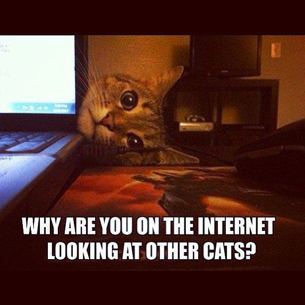 why are you looking at other cats funny memes