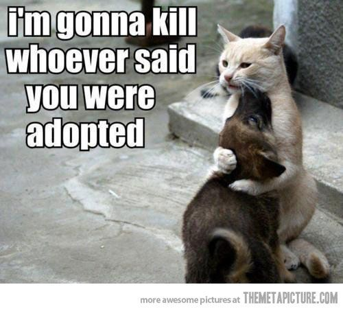 Cute animal picture of a cat and a puppy hugging I m gonna kill whoever said you were adopted
