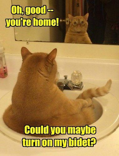 Cats bidet mirror ohai tabby