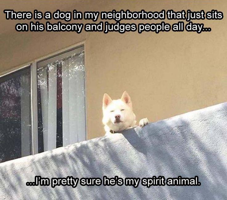 Animal Memes Unique Spirit Animal Funny Dogs Pinterest