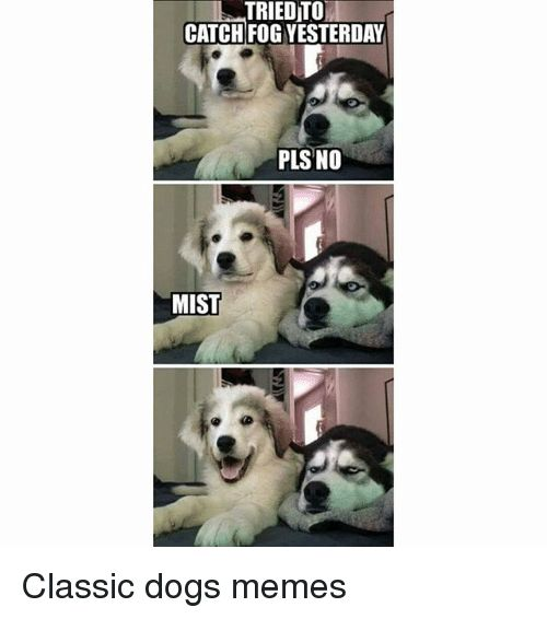 Dogs Funny and Memes TRIEDTO CATCH FOG YESTERDAY PLS NO MIST Classic dogs