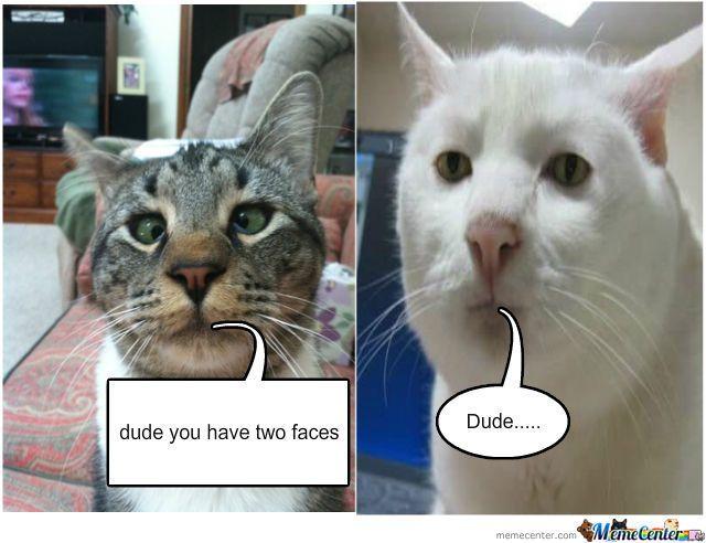 Derp Cat And Stoner Cat