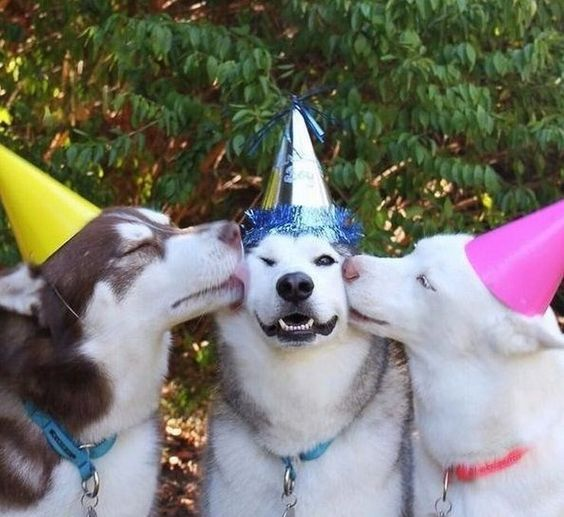 Happy Birthday to you funny puppy dogs