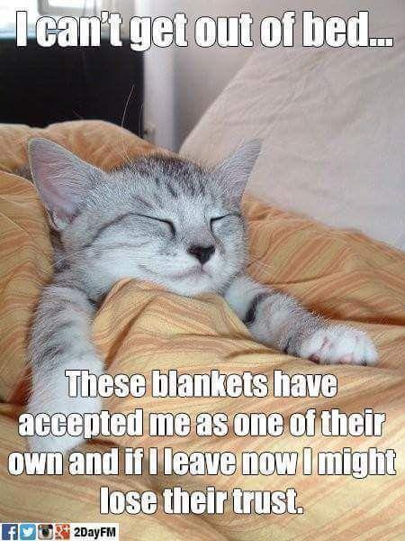 cats cat caption humor fun memes jokes soumo eu