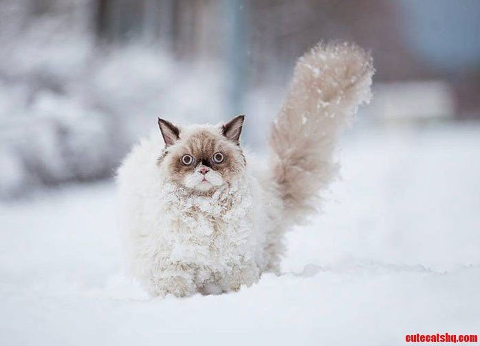Cat in the snow is crying out for help