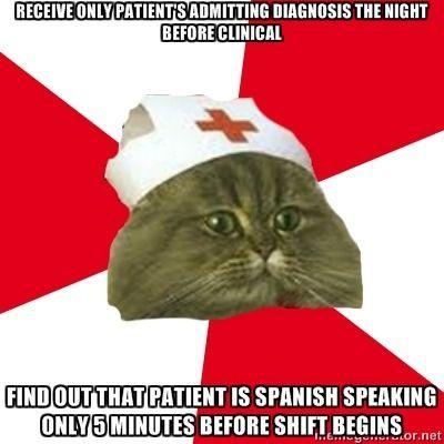 Amazing Funny Cat Memes Tumblr Fuck Yeah Nursing Student Cat