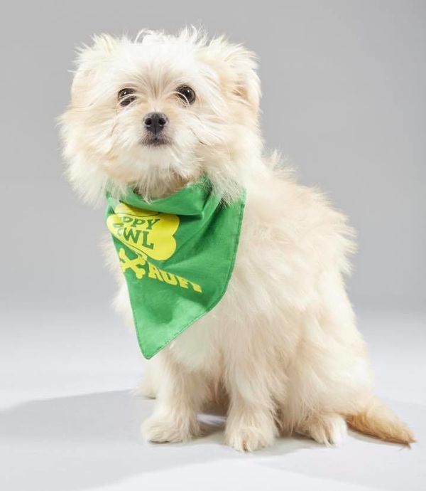 STAR dogs featured in Animal Planet s Puppy Bowl