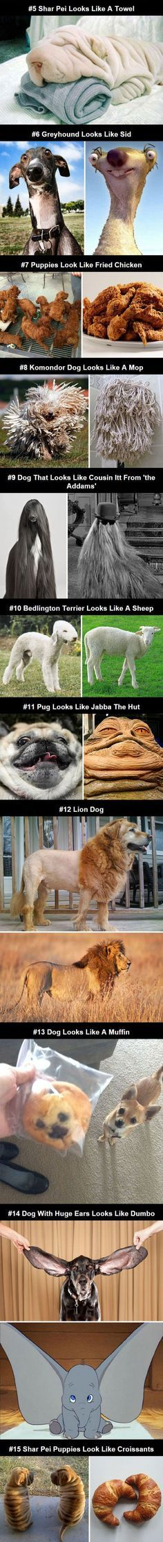 Dogs That Look Like Other Things Cute Dogs Funny Chicken Funny Dog