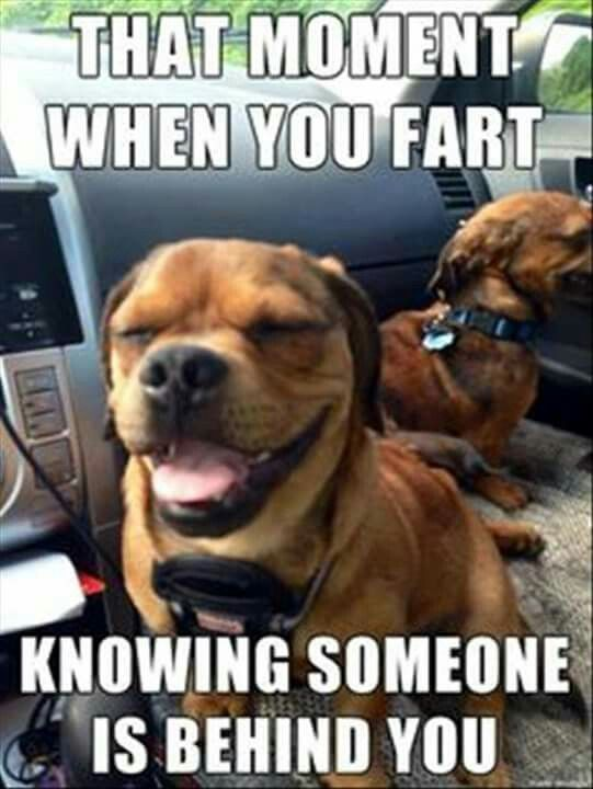 Grasp the Fascinating Funny Animal Memes Farting