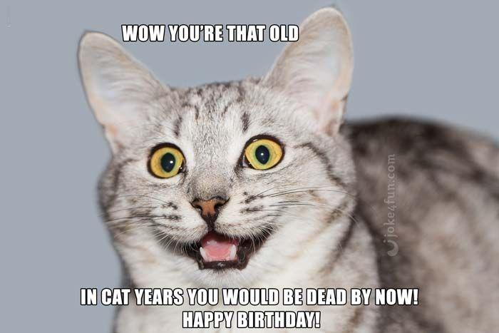 Memes funny birthday memes