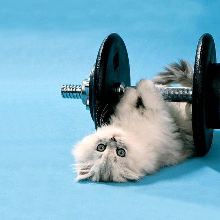 Kitten Lifting Weight Funny Animated Image