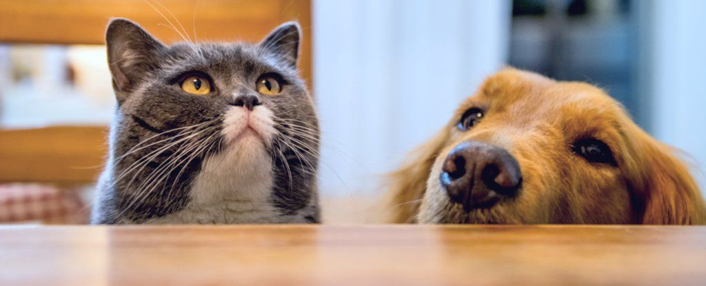 cat and dog frens 1024