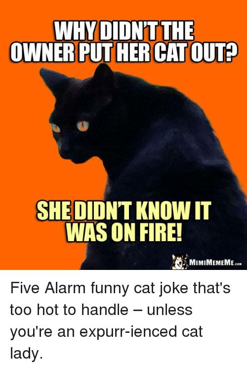 Grasp the Incredible Funny Cat Pictures too Hot