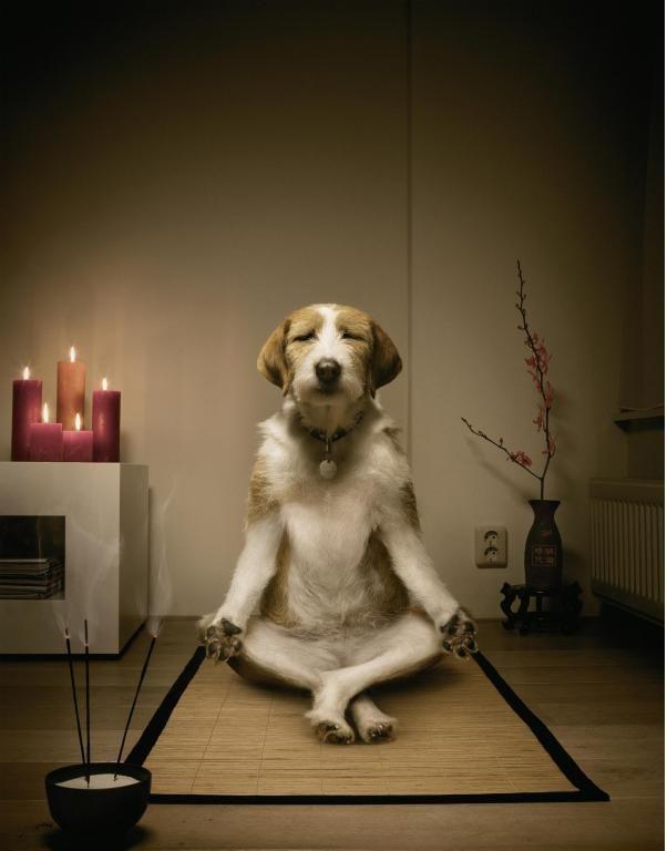 dog meditation funny Meme Template