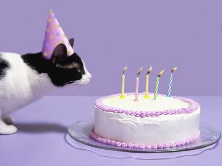 A cat celebrating a birthday