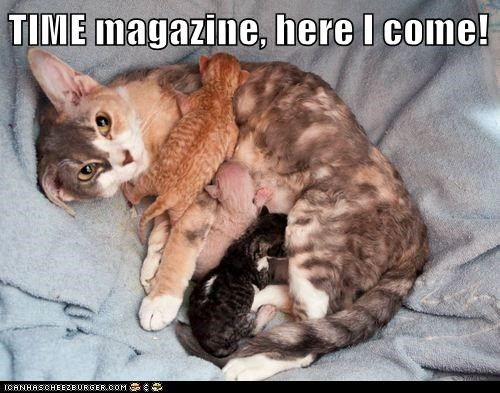are you mom enough breastfeeding Cats food kitten cats mom moms nom nursing time time magazine