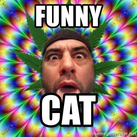 funny cat Joe Rogan