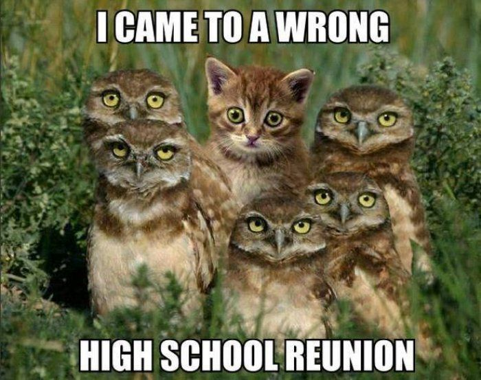 Cat meme I came to the wrong high school reunion