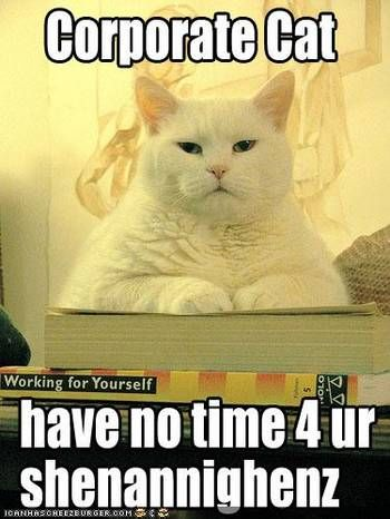 funny pictures corporate cat