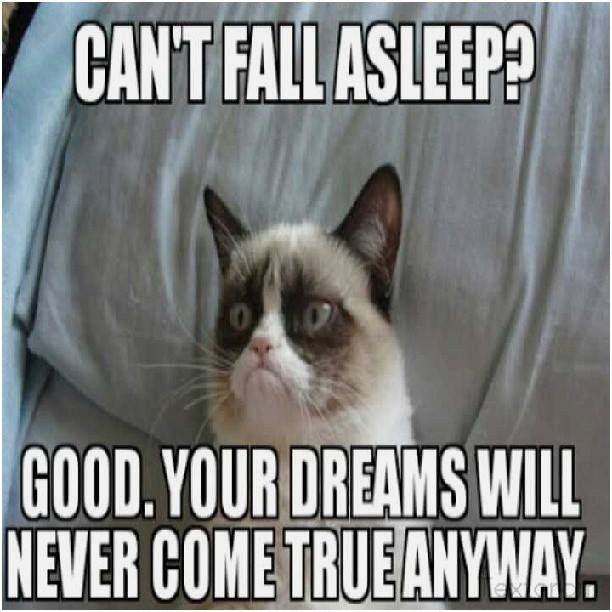 Grumpy Cat Jokes Twinkle Grumpy Cat Jokes Twinkle Top 30 Funny animal memes
