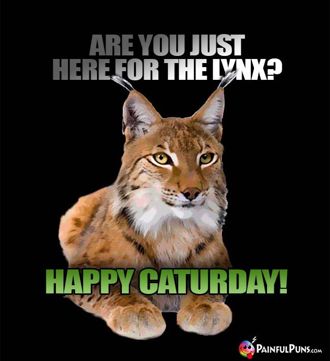 Are you just here for the lynx Happy Caturday