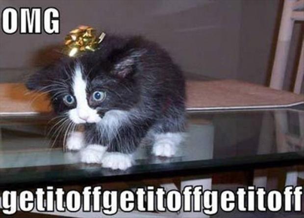 christmas ribbon funny cats