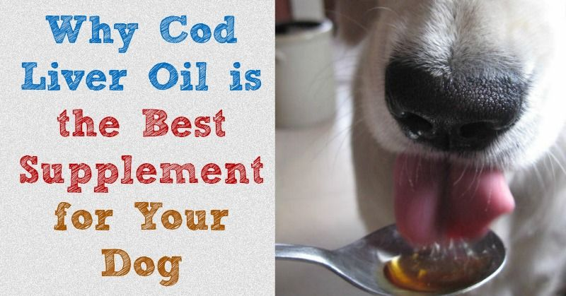 An explainantion of the many benefits of cod liver oil for dogs and why it s the