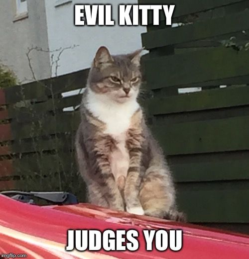 Evil kitty judges you