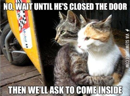 Scumbag cats