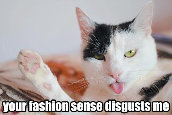 Fashionista Top 20 Funniest Funny Cats And Dogs Funny Cat Memes Top